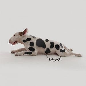 214955-R3L8T8D-650-Jimmy-the-Bull-Terrier11__605