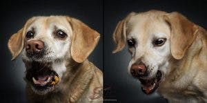 Talented_German_Photographer_Shoots_Hilarious_Photos_Of_Dogs_Catching_Treats_3