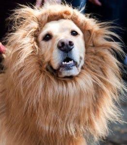 LionDog copy