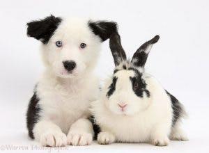 cute-matching-pets-warren-photographic-41-57e9354dbb856__880