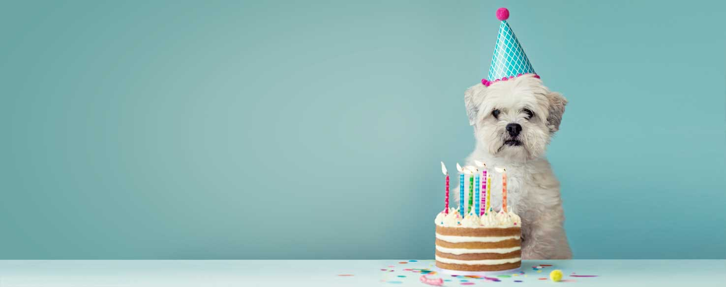 A dog about to blow out candles on a cake