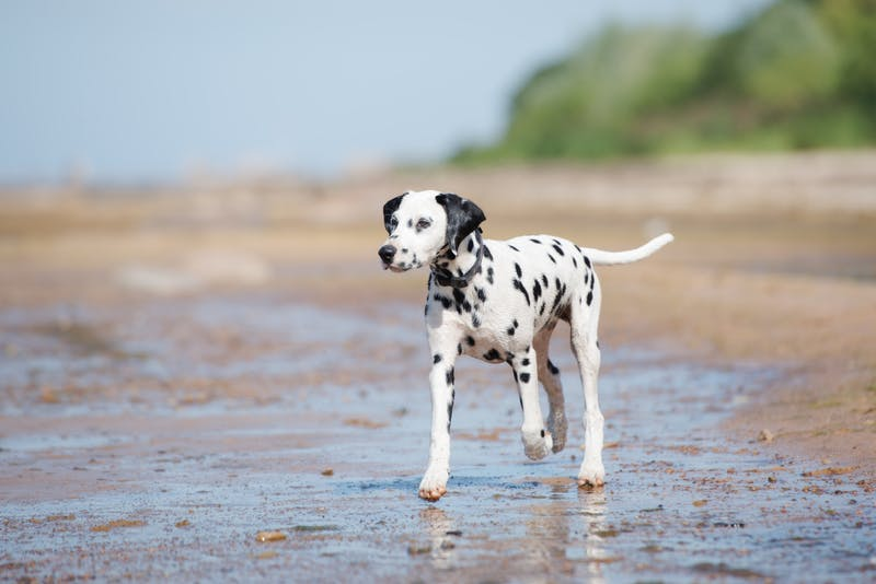 's activity story for Activities For Dogs On A Beach