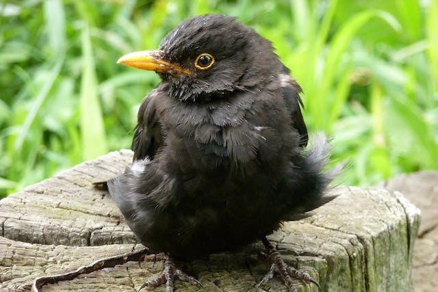 Beak Deformities in Birds - Symptoms, Causes, Diagnosis, Treatment, Recovery, Management, Cost