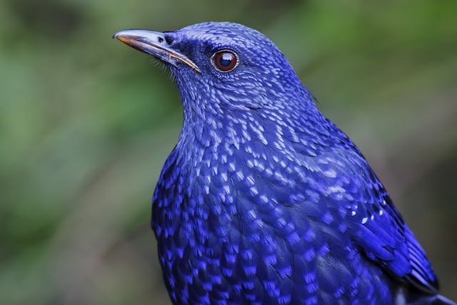 Candidiasis in Birds - Symptoms, Causes, Diagnosis, Treatment, Recovery, Management, Cost