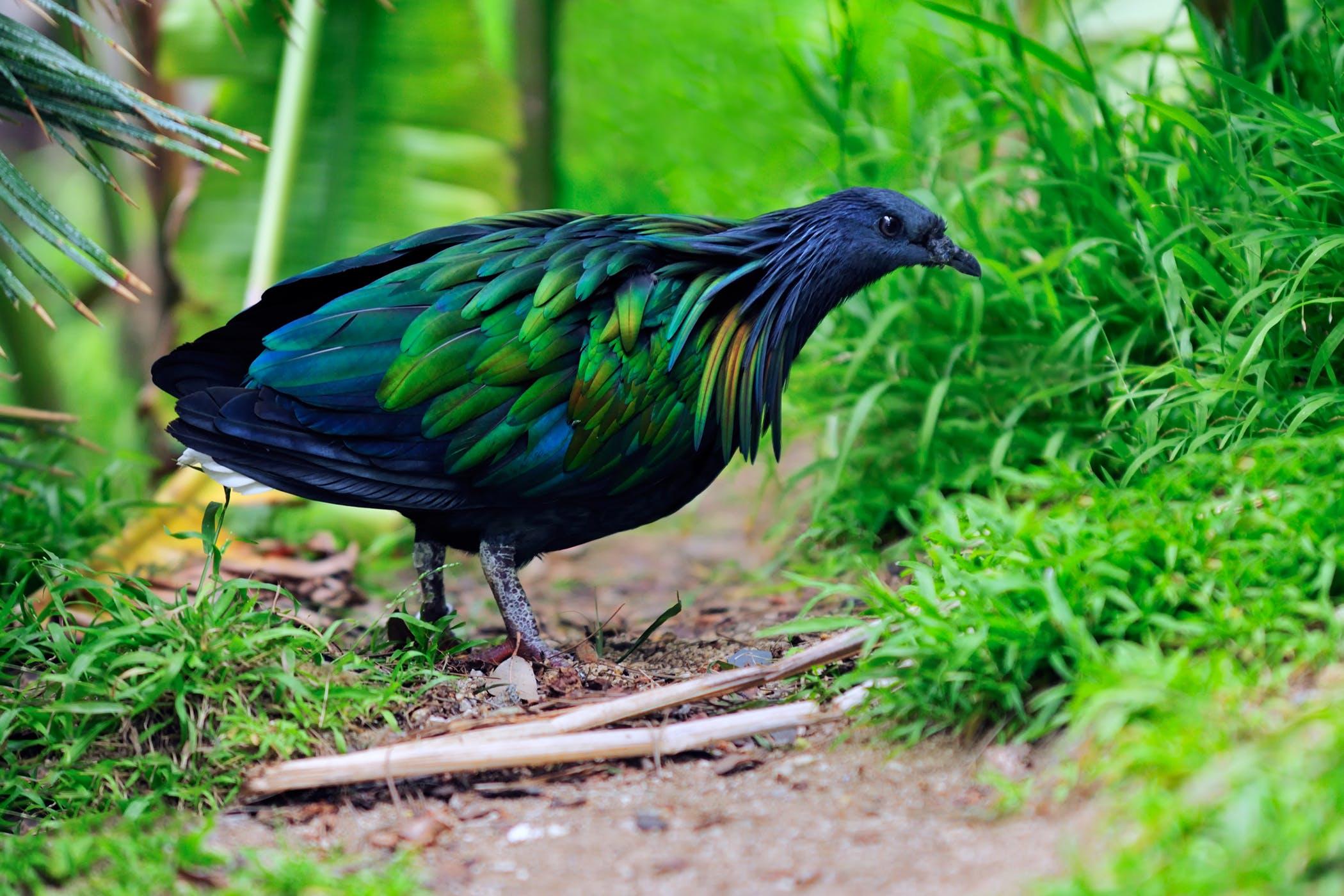 Cardiac Disease in Birds