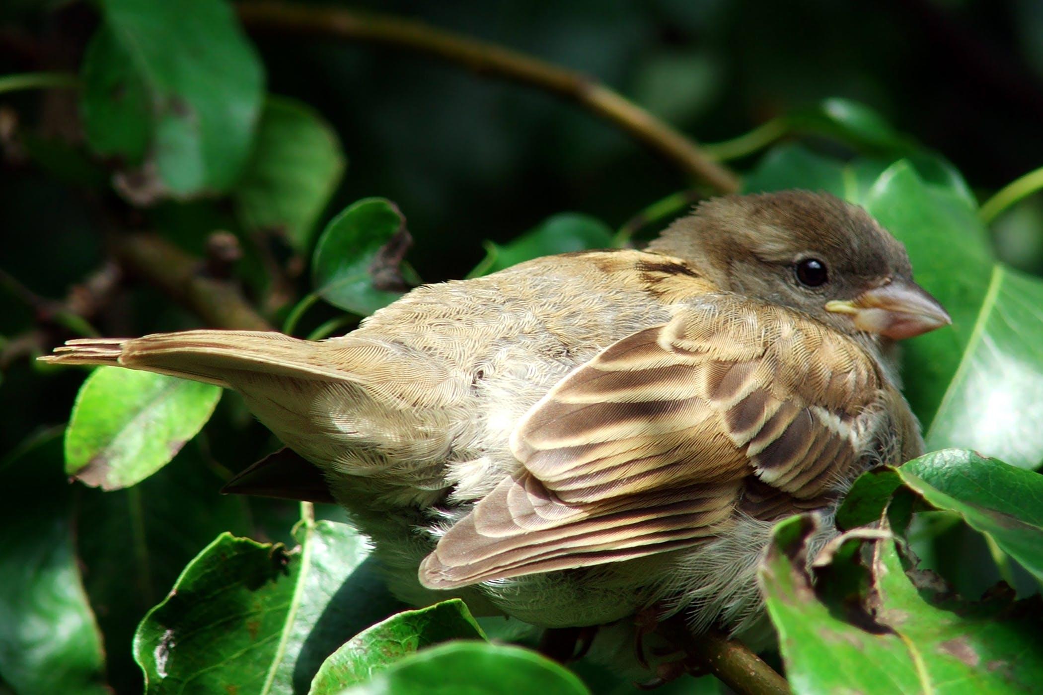 Coccidiosis in Birds - Symptoms, Causes, Diagnosis