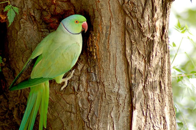 Heavy Metal Toxicosis in Birds - Symptoms, Causes, Diagnosis, Treatment, Recovery, Management, Cost