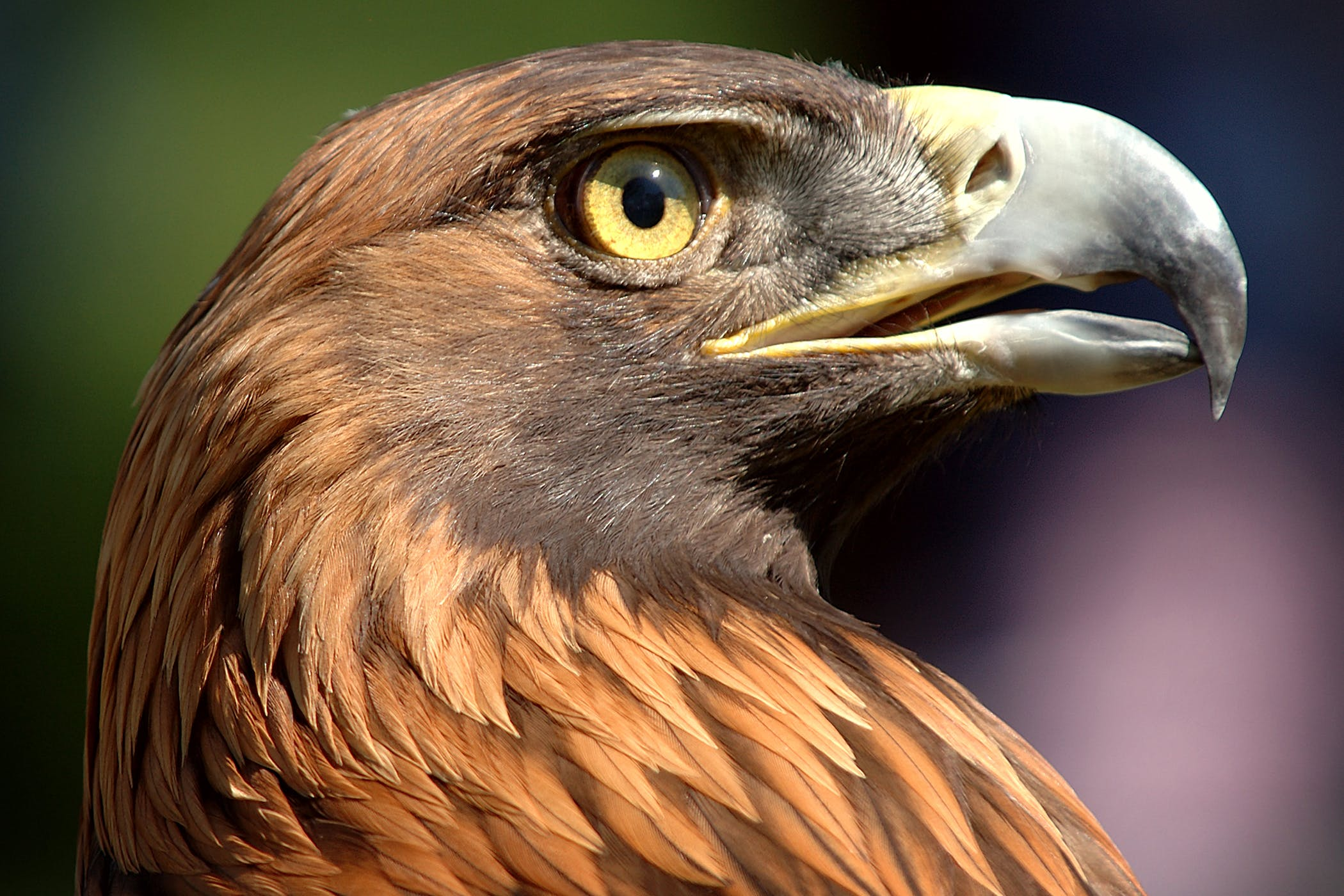 Hepatobiliary Adenocarcinoma in Birds