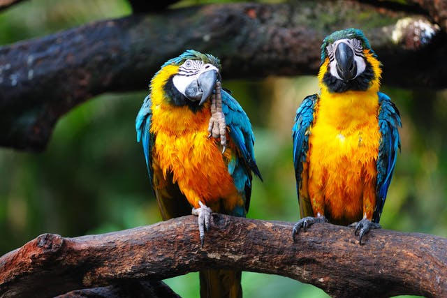 Herpesvirus Infection in Birds - Symptoms, Causes, Diagnosis, Treatment, Recovery, Management, Cost
