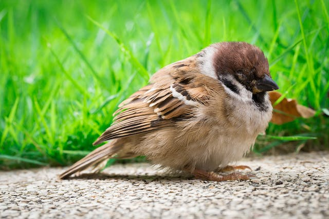 Influenza in Birds - Symptoms, Causes, Diagnosis, Treatment, Recovery, Management, Cost