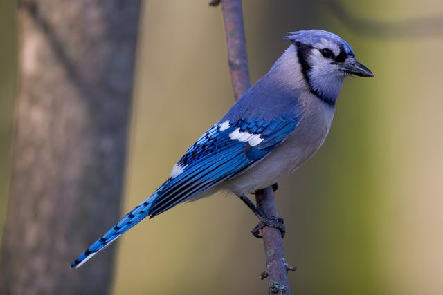 Lead Poisoning in Birds - Symptoms, Causes, Diagnosis, Treatment, Recovery, Management, Cost
