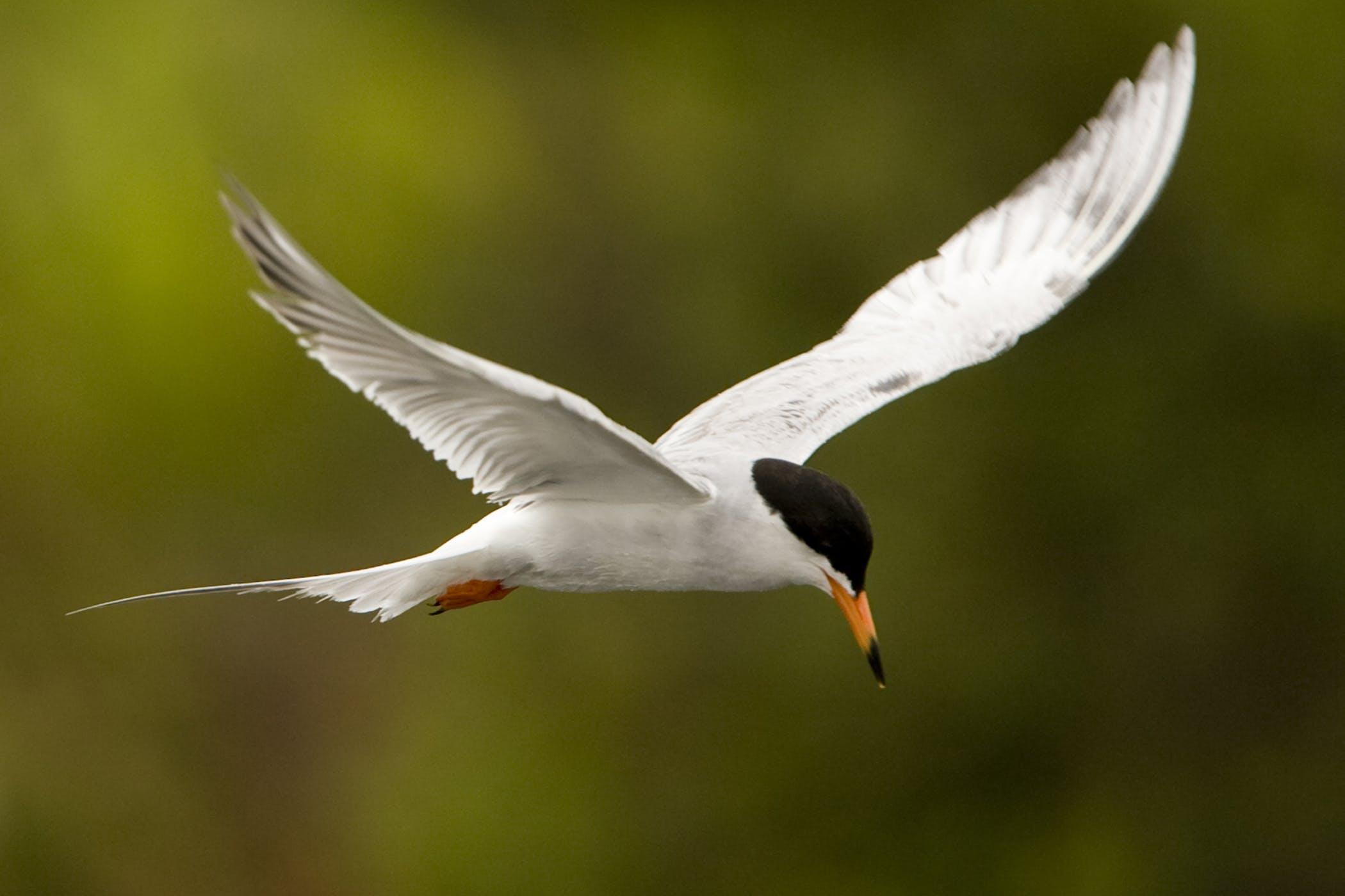 Liposarcoma in Birds