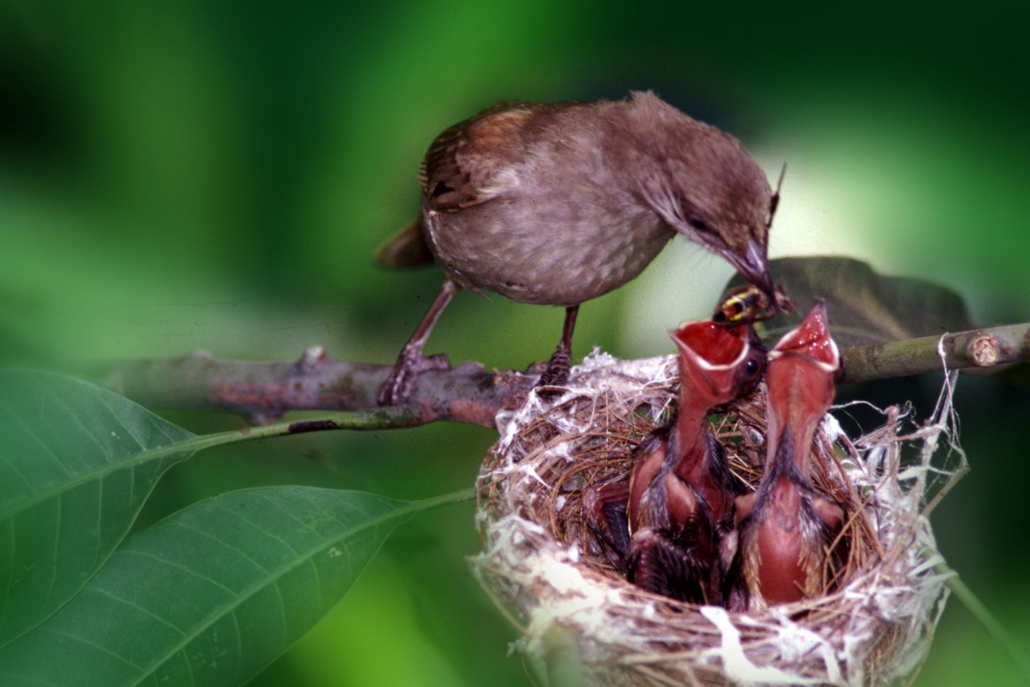 Lockjaw in Birds