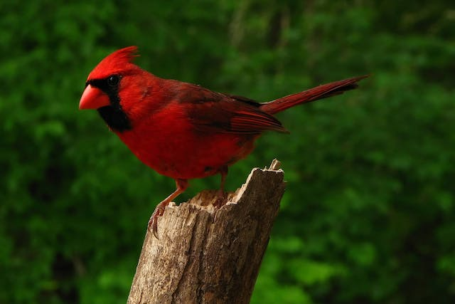 Marek's Disease in Birds - Symptoms, Causes, Diagnosis, Treatment, Recovery, Management, Cost