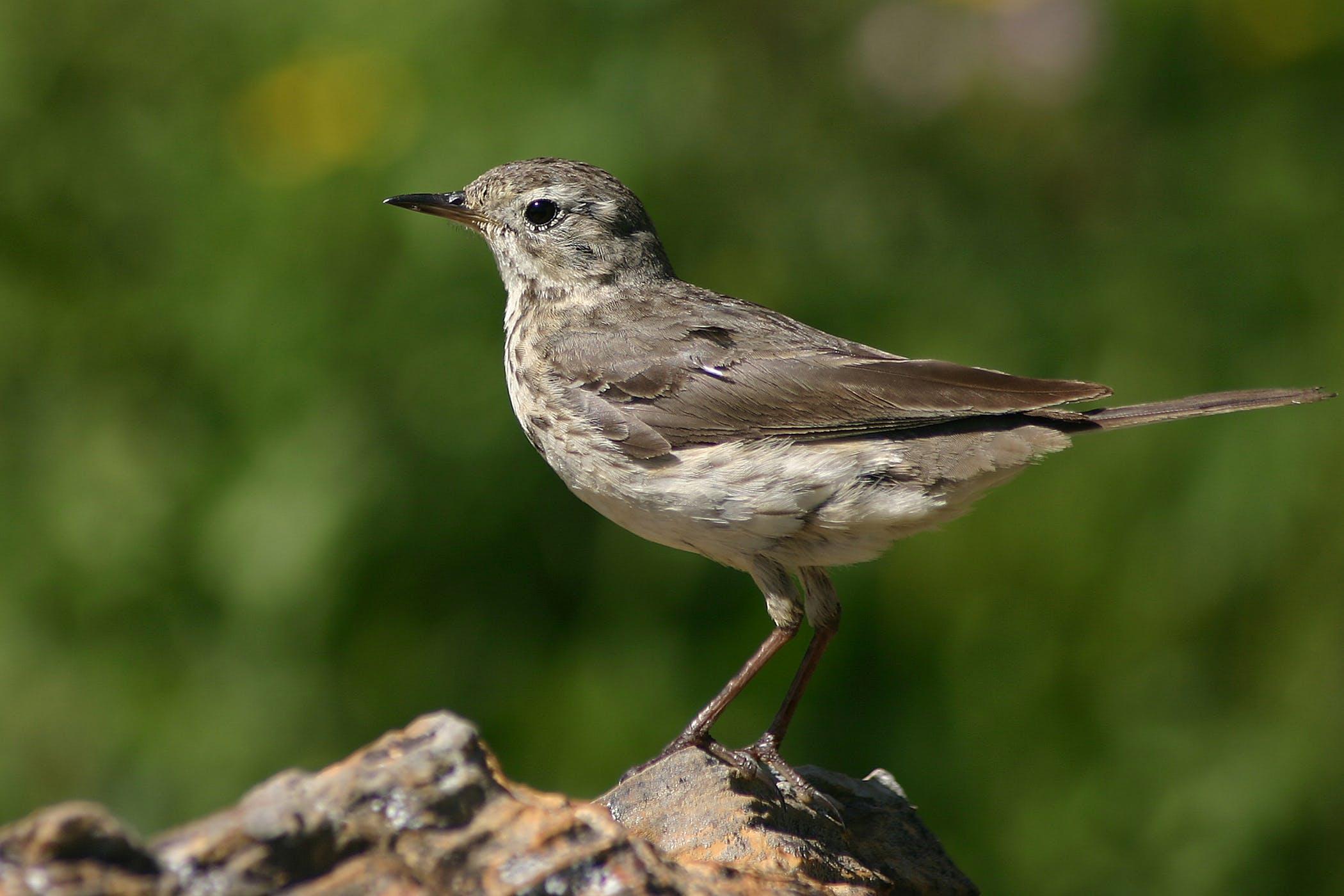 Musculoskeletal Neoplasms in Birds