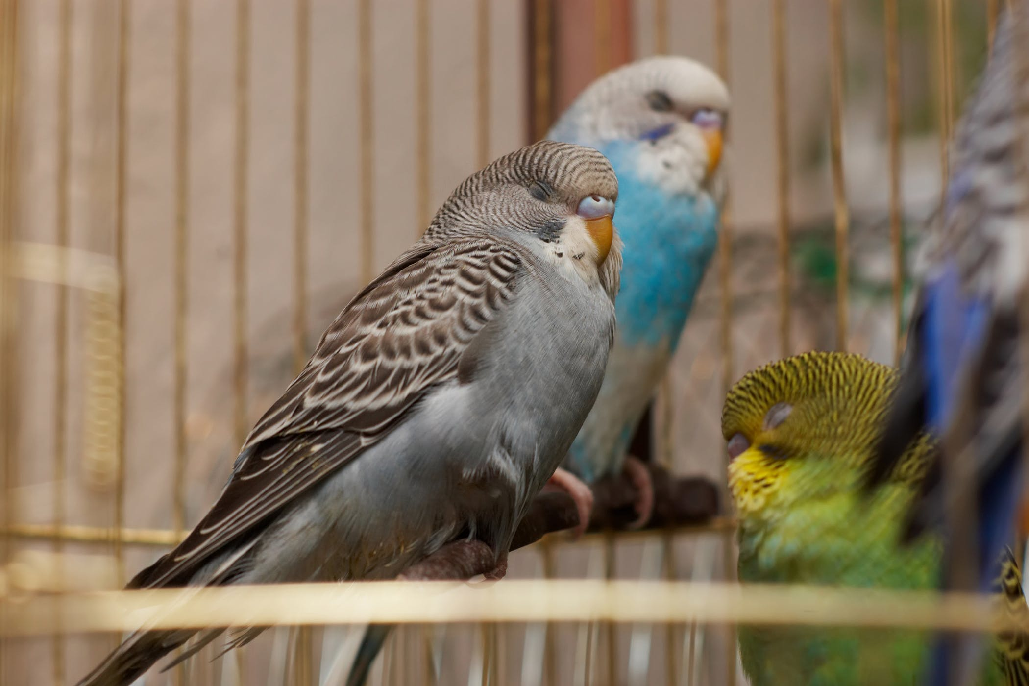 Mycobacterium Infections in Birds