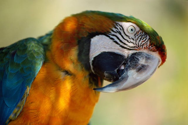 Overheating in Birds - Signs, Causes, Diagnosis, Treatment, Recovery, Management, Cost