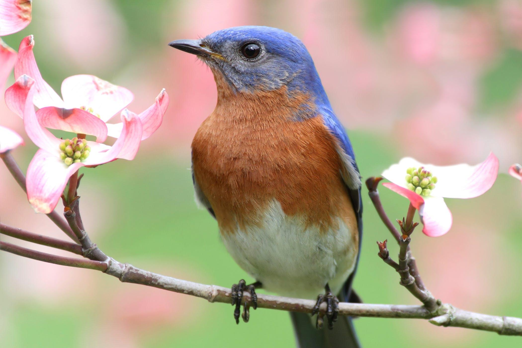 Polytetrafluoroethylene Toxicosis in Birds