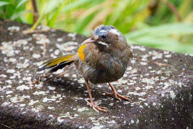 Poxvirus Infections in Birds - Symptoms, Causes, Diagnosis, Treatment, Recovery, Management, Cost