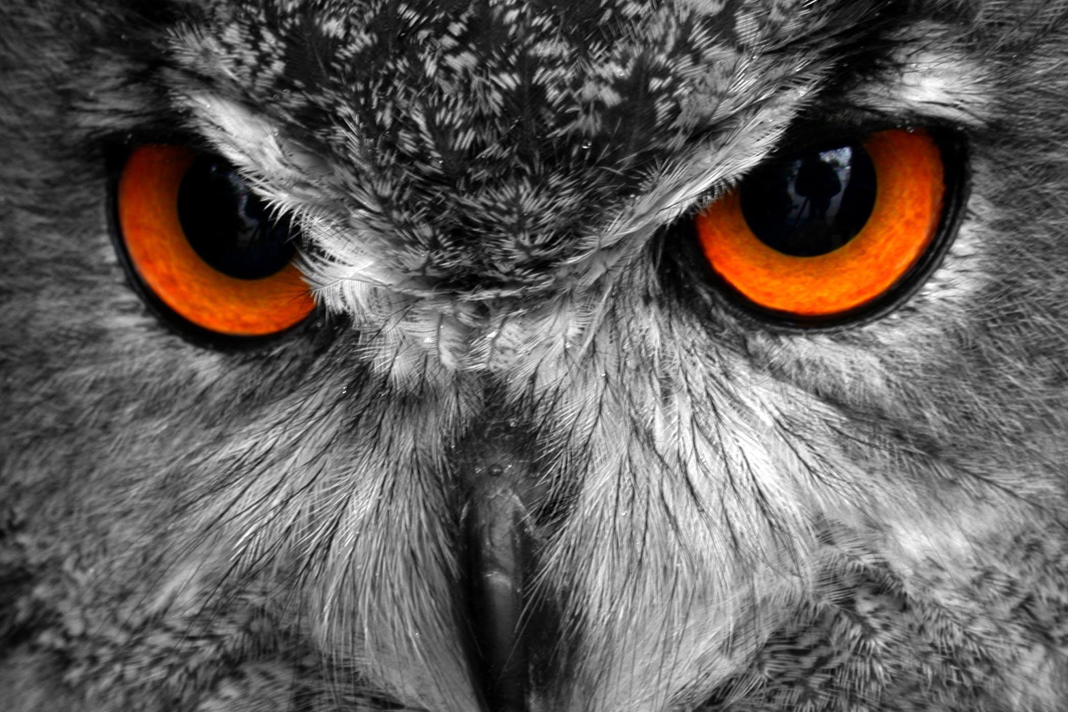 red eye in birds
