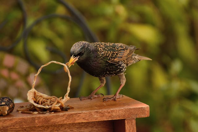 Roundworms in Birds - Symptoms, Causes, Diagnosis, Treatment, Recovery, Management, Cost