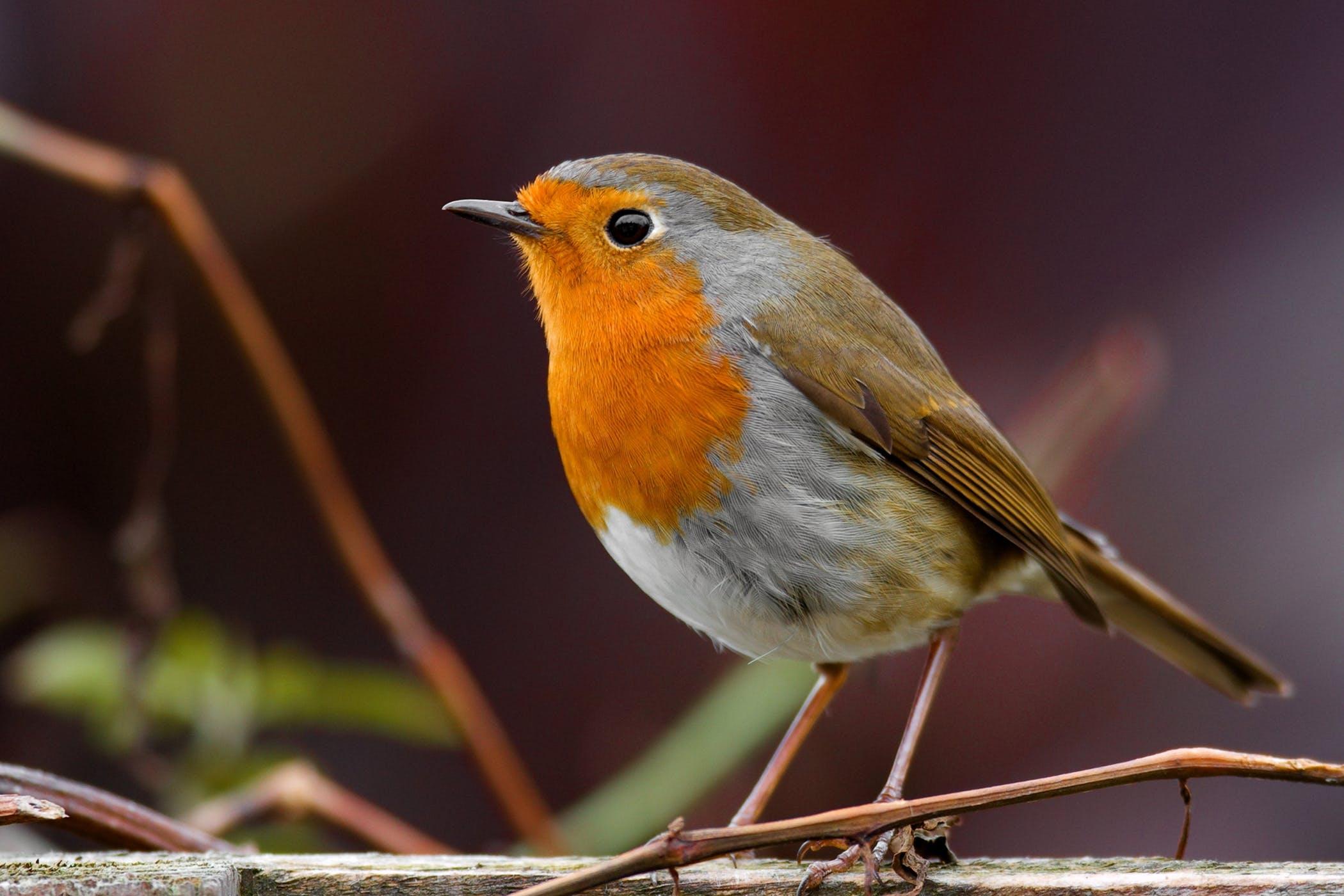 Seizures in Birds