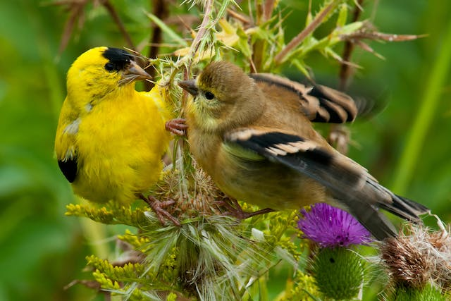 Sneezing and Nasal Discharge in Birds - Symptoms, Causes, Diagnosis, Treatment, Recovery, Management, Cost