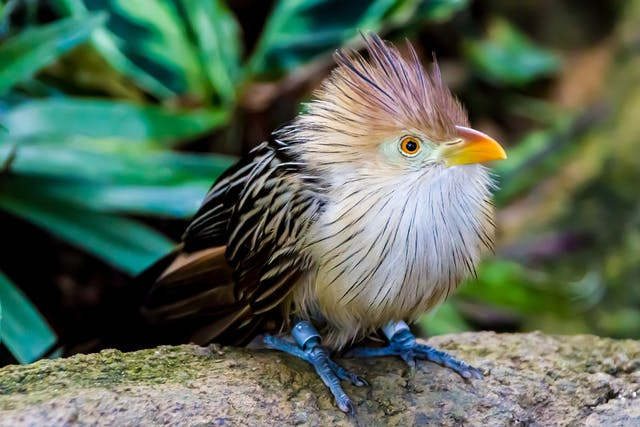 Spirochetosis in Birds - Symptoms, Causes, Diagnosis, Treatment, Recovery, Management, Cost