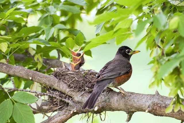 Vitamin A Deficiency in Birds - Symptoms, Causes, Diagnosis, Treatment, Recovery, Management, Cost