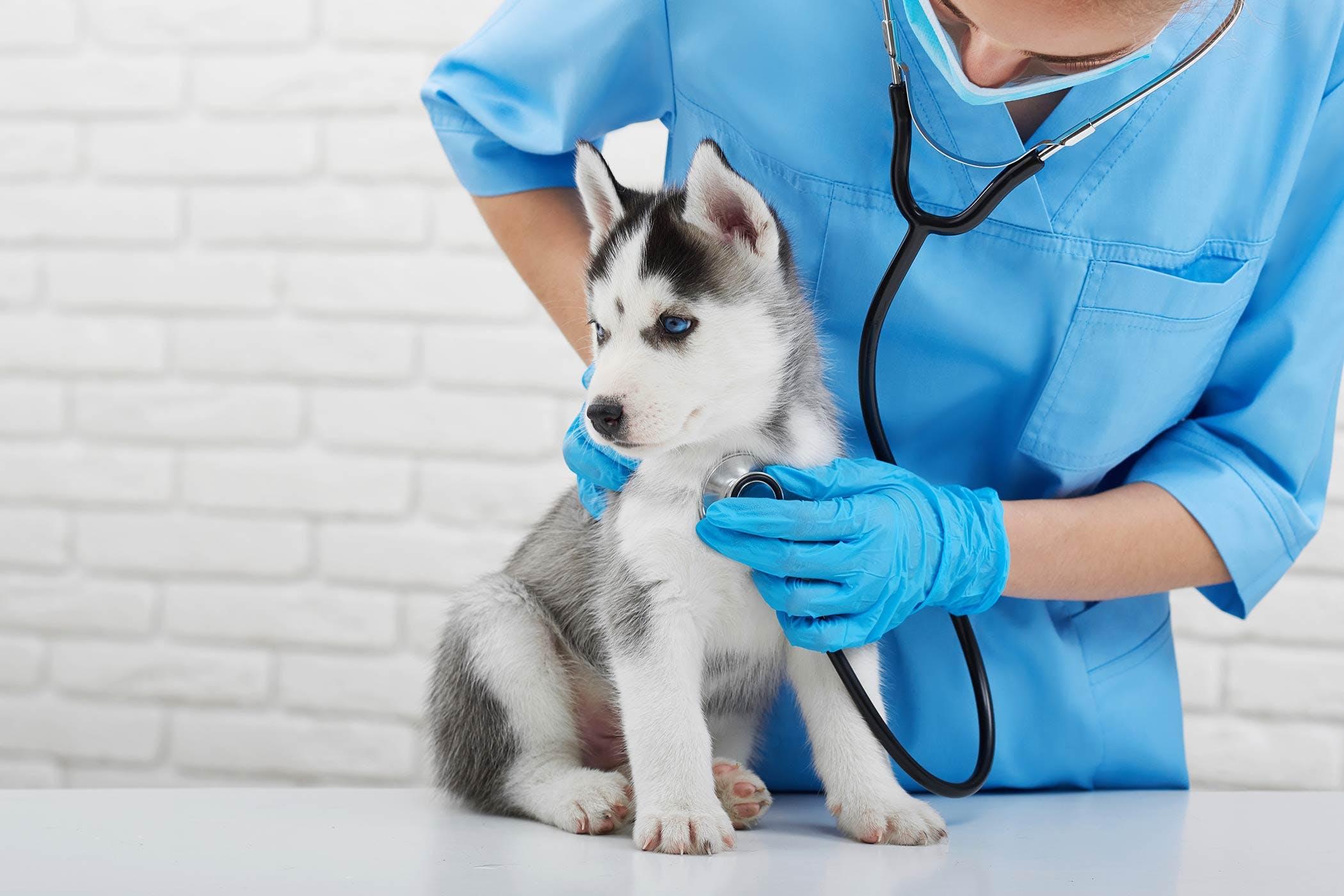 Autoimmune Skin Disease In Dogs