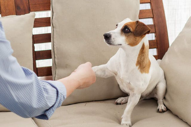 Bacterial Claw Infection in Dogs - Symptoms, Causes, Diagnosis, Treatment, Recovery, Management, Cost