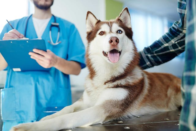 Brain Inflammation Due to Parasitic Infection in Dogs - Symptoms, Causes, Diagnosis, Treatment, Recovery, Management, Cost