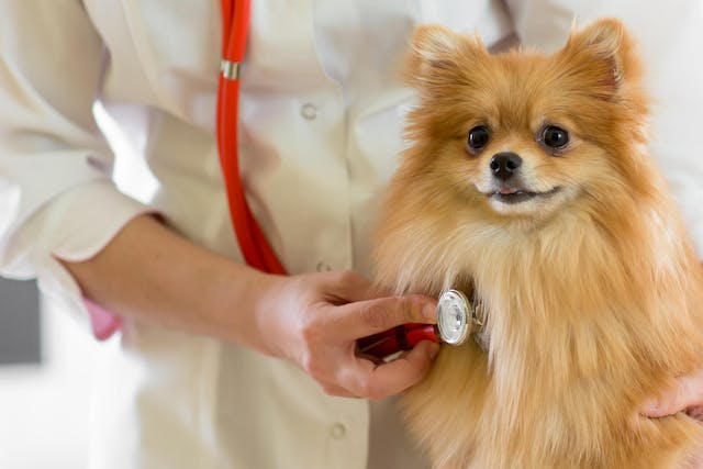 Delayed Gastric Emptying in Dogs - Symptoms, Causes, Diagnosis, Treatment, Recovery, Management, Cost