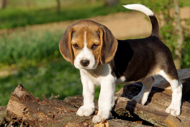 Digestive Problems in Dogs - Symptoms, Causes, Diagnosis, Treatment, Recovery, Management, Cost