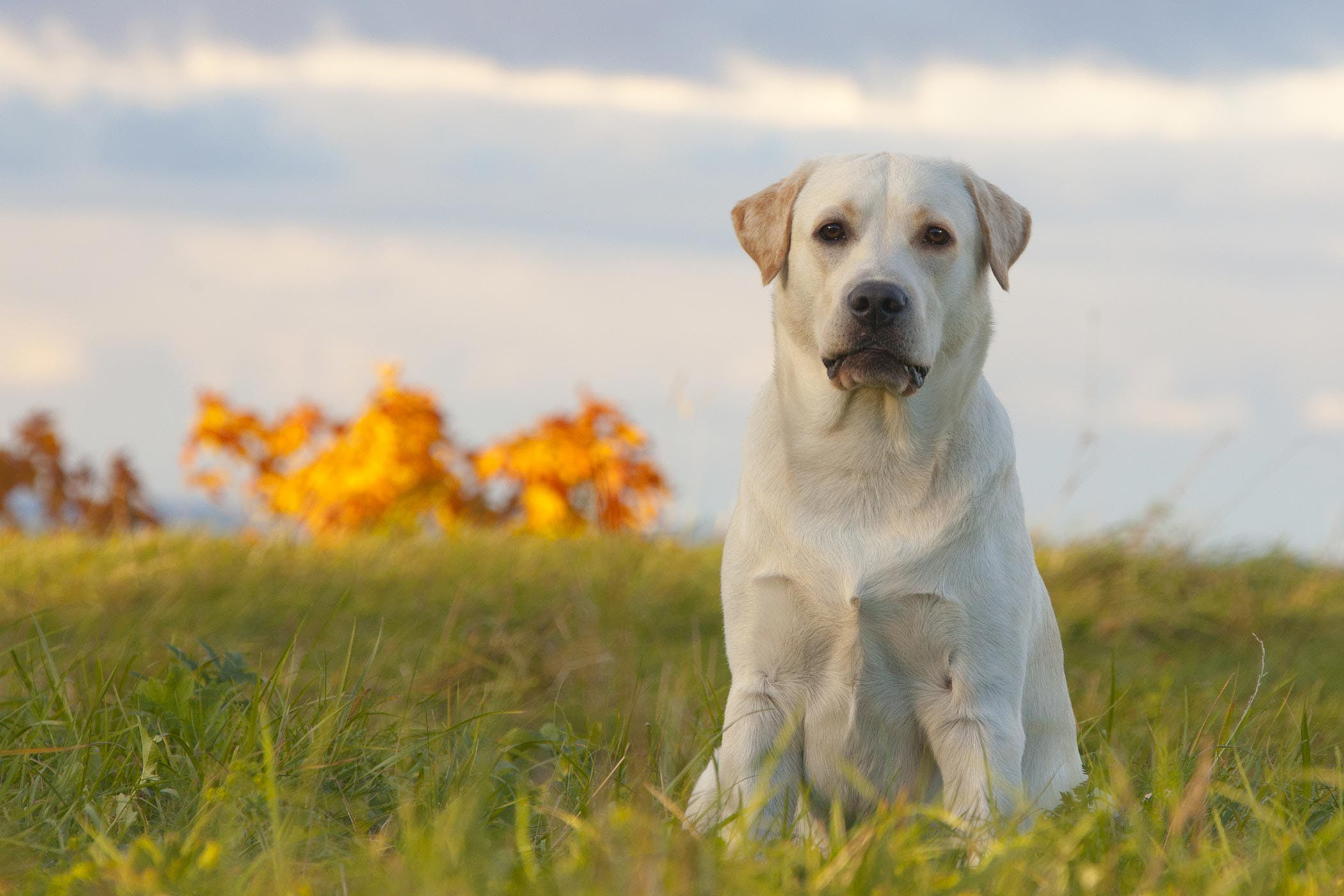 Discoloration of Saliva in Dogs - Symptoms, Causes, Diagnosis