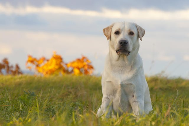 Discoloration of Saliva in Dogs - Symptoms, Causes, Diagnosis, Treatment, Recovery, Management, Cost