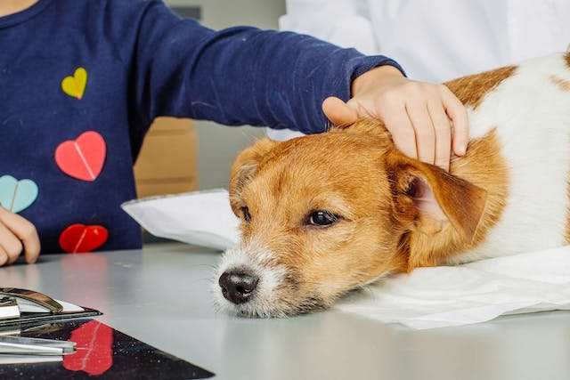 Dsychezia in Dogs - Symptoms, Causes, Diagnosis, Treatment, Recovery, Management, Cost