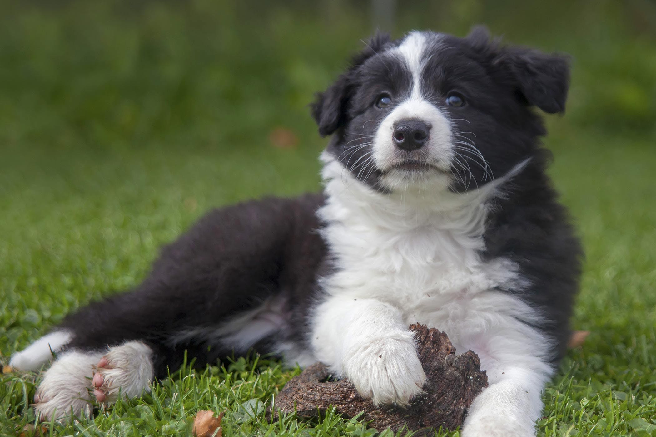 Fatty Tissue Inflammation in Dogs - Symptoms, Causes