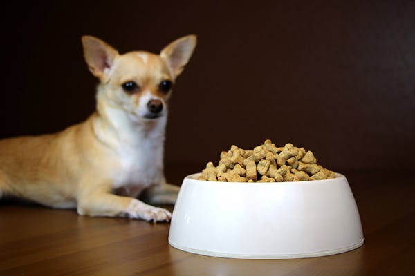 Food Allergies in Dogs - Symptoms, Causes, Diagnosis, Treatment, Recovery, Management, Cost