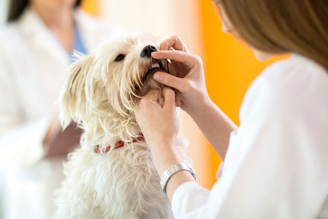 Oral Disease in Dogs - Symptoms, Causes, Diagnosis, Treatment, Recovery, Management, Cost