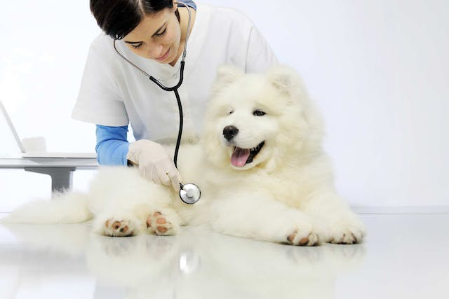 Sensitive Stomach in Dogs - Symptoms, Causes, Diagnosis, Treatment, Recovery, Management, Cost