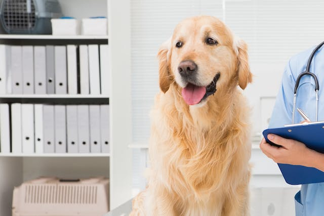Steroid-Responsive Meningitis-Arteritis in Dogs - Symptoms, Causes, Diagnosis, Treatment, Recovery, Management, Cost