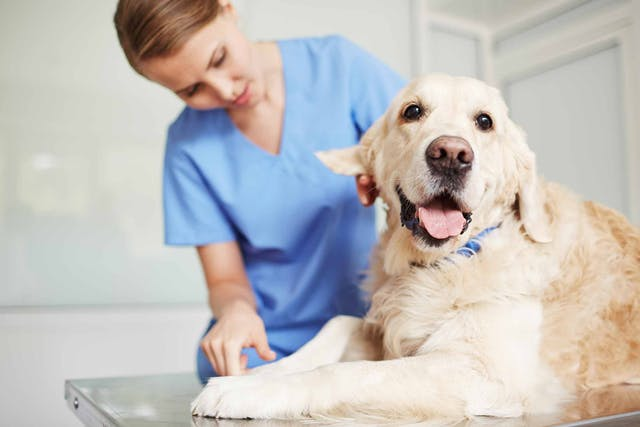 Temporomandibular Joint Disorders in Dogs - Symptoms, Causes, Diagnosis, Treatment, Recovery, Management, Cost