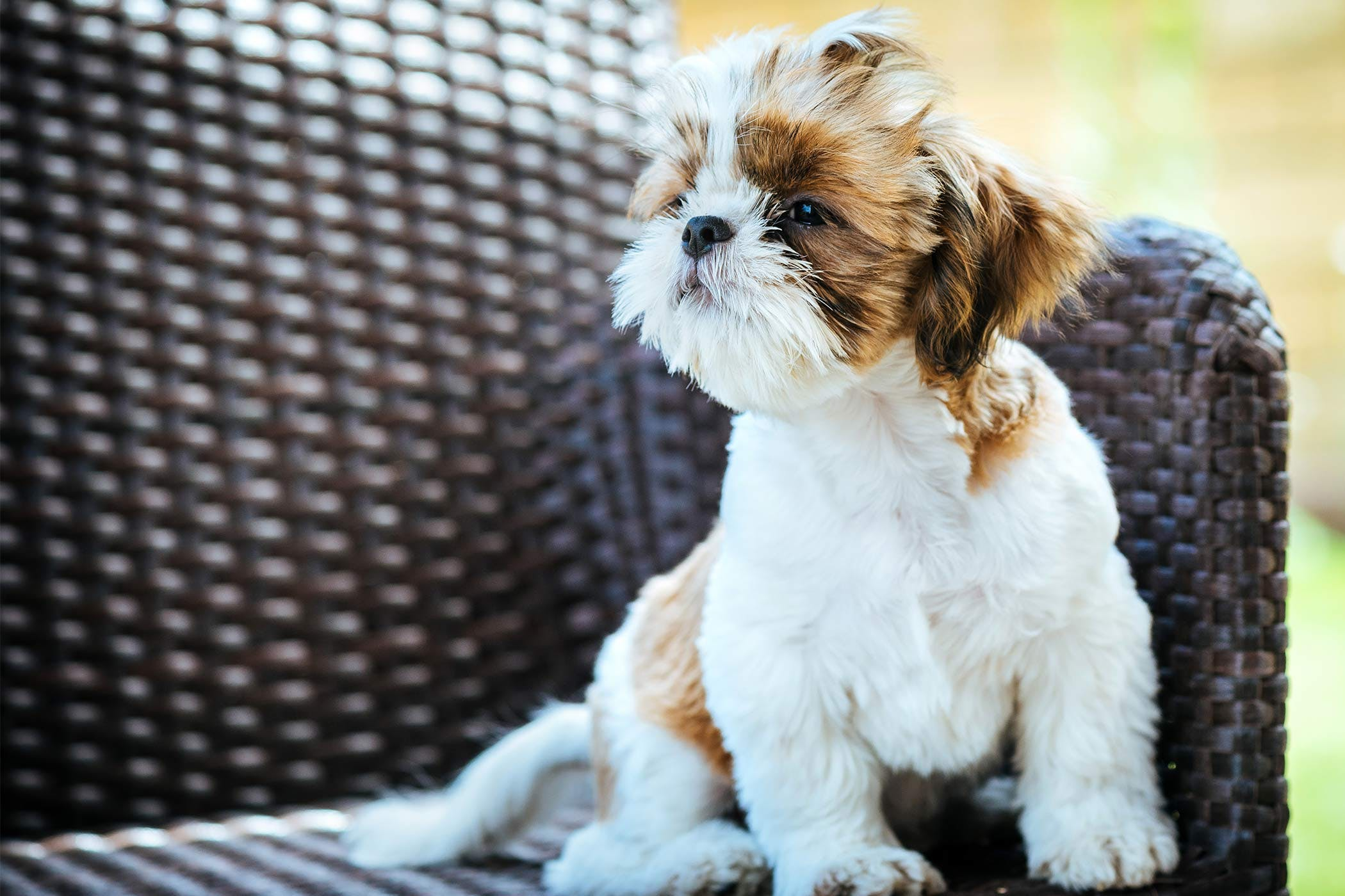 Going Blind In Dogs Definition Cause Solution Prevention Cost