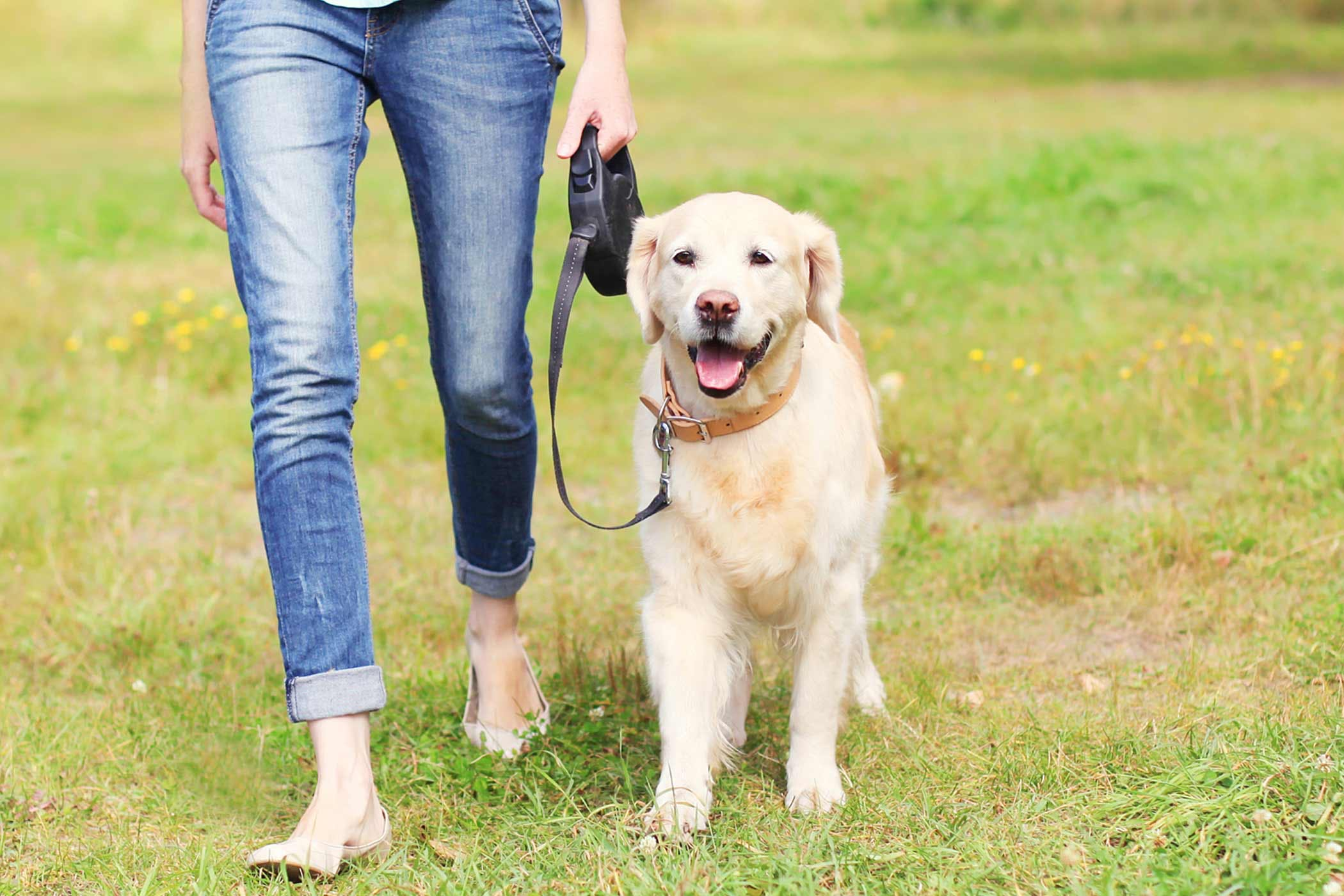 Pain When Walking In Dogs - Definition, Cause, Solution -5006