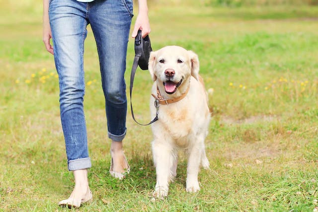 Why is my dog pain when walking?