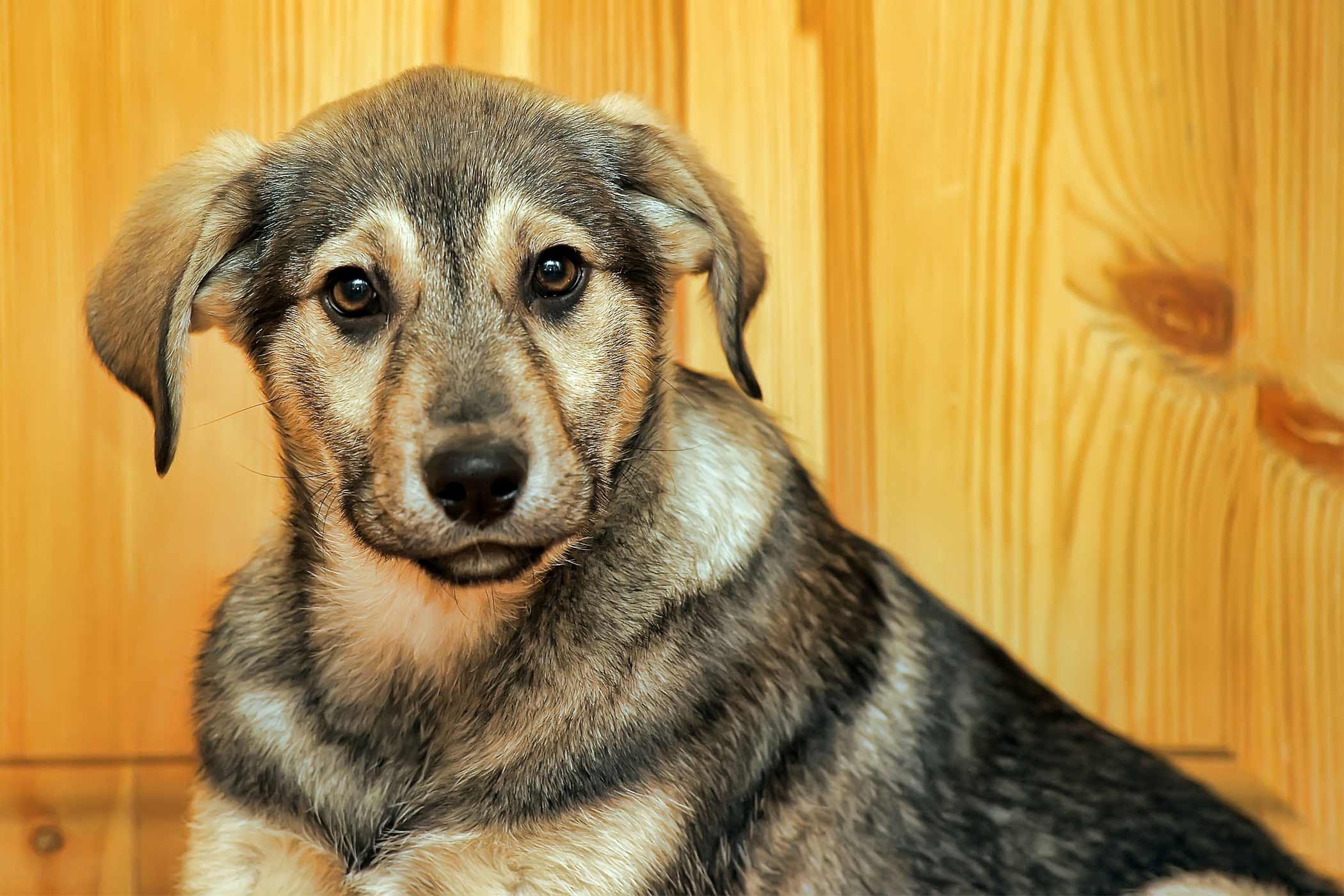 Sneezing Blood in Dogs - Definition, Cause, Solution ...