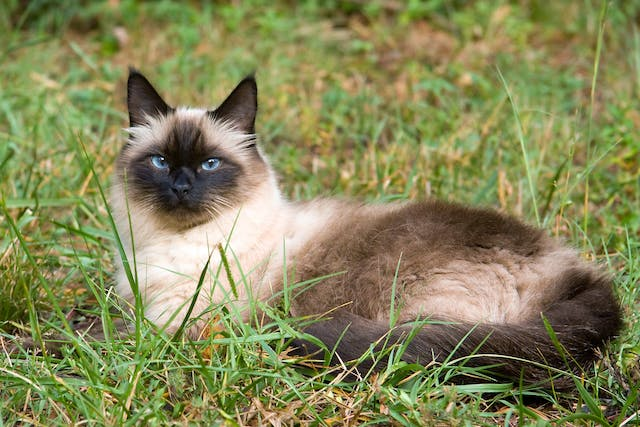 Abdominal Lymph Node Removal in Cats - Conditions Treated, Procedure, Efficacy, Recovery, Cost, Considerations, Prevention