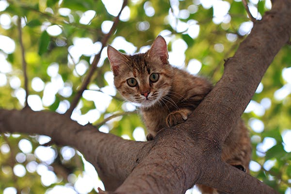 Acne in Cats - Symptoms, Causes, Diagnosis, Treatment, Recovery, Management, Cost