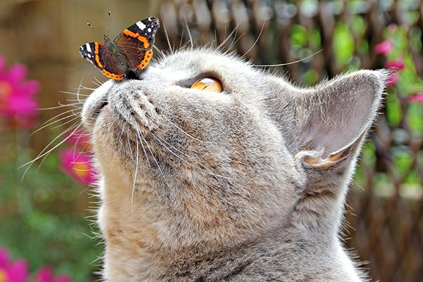 Allergic Reaction to Insects in Cats - Symptoms, Causes, Diagnosis, Treatment, Recovery, Management, Cost